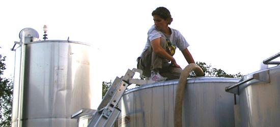 Francesca l'enologa al lavoro per la produzione del suo vino toscano.