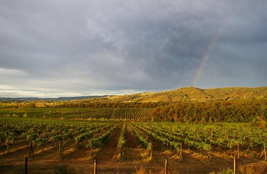Arcobaleno sulle vigne del vino naturale di Tunia